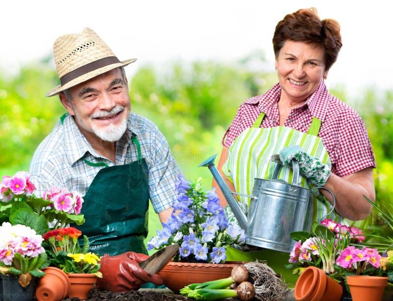 Coppie senior nel giardino floreale fotografia stock libera da diritti