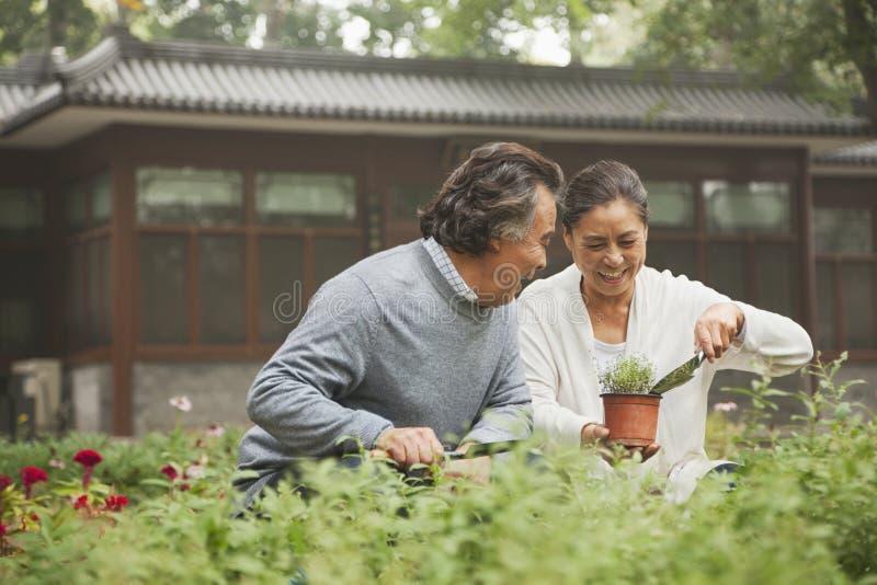 Coppie senior sorridenti in giardino fotografia stock