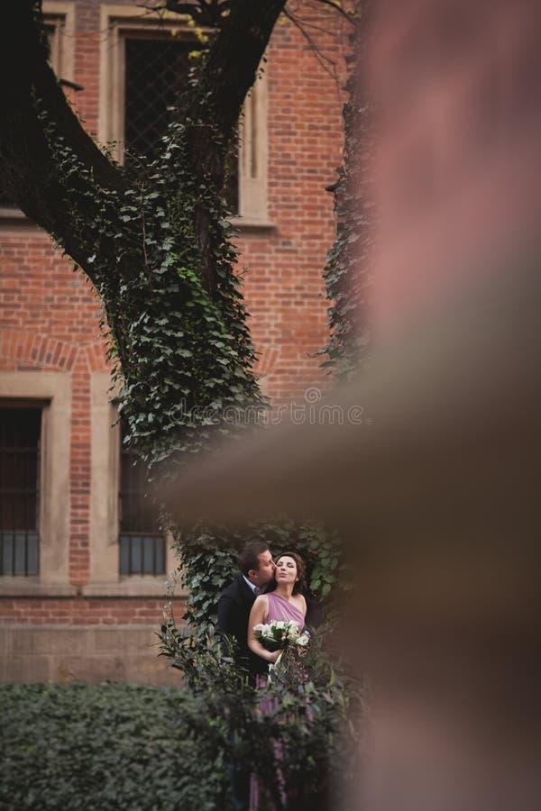 Coppie, sposa europea e sposo bacianti nel parco vicino al grande albero fotografia stock
