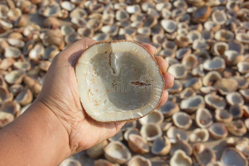 Copra della noce di cocco ispezionata dall'uomo prima di schiacciarla per estrarre olio, con il sole che asciuga copra nei preced fotografie stock libere da diritti