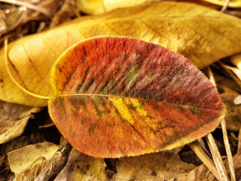 Copra di foglie a fuoco fotografie stock libere da diritti