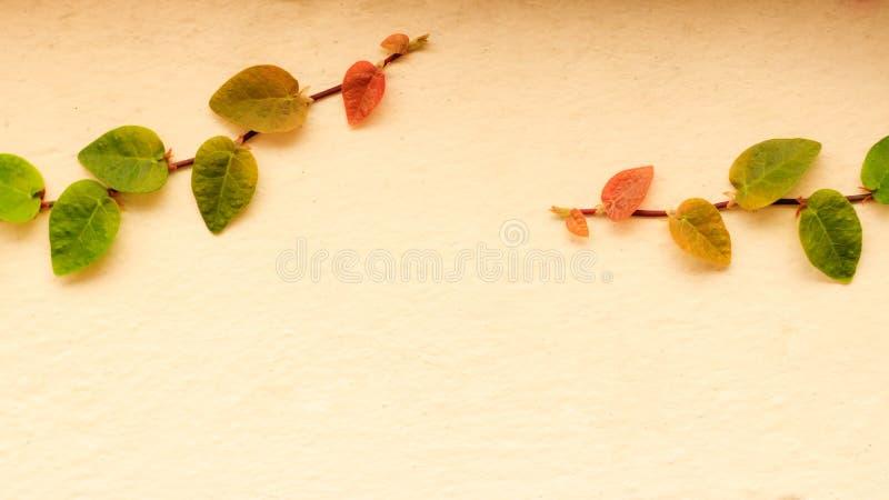 Copra di foglie sulla parete, edera sulla parete fotografia stock libera da diritti