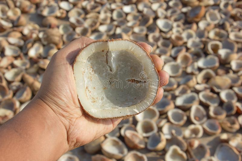 Coprah de noix de coco inspecté par un homme avant de l'écraser pour extraire l'huile, avec le soleil séchant le coprah à l'arriè photos libres de droits