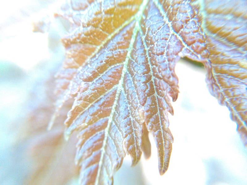 Coprire di foglie fuori 3 fotografie stock libere da diritti