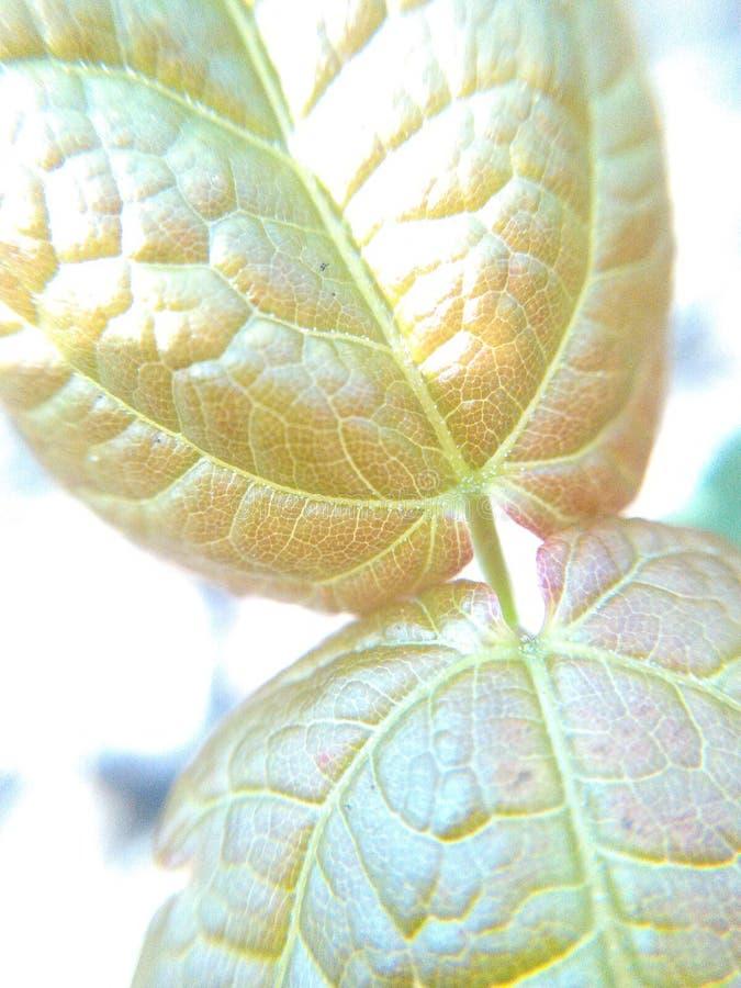 Coprire di foglie fuori 1 immagine stock