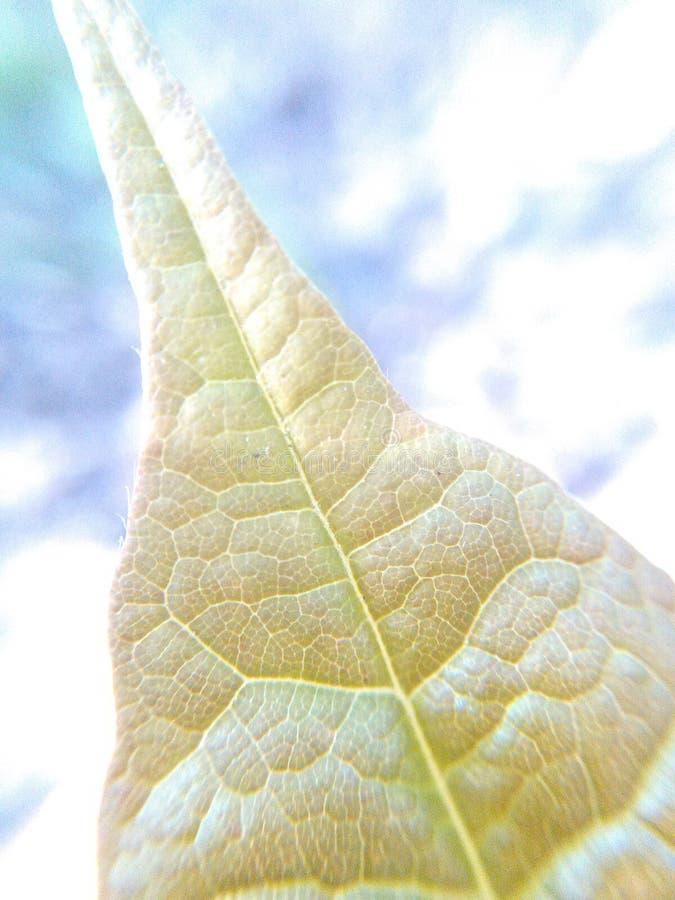 Coprire di foglie fuori 2 fotografia stock libera da diritti