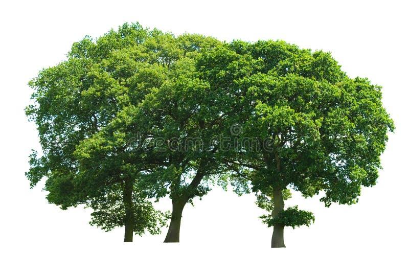 Copse de três árvores fotografia de stock