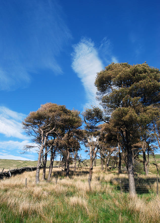 Copse of trees stock photography