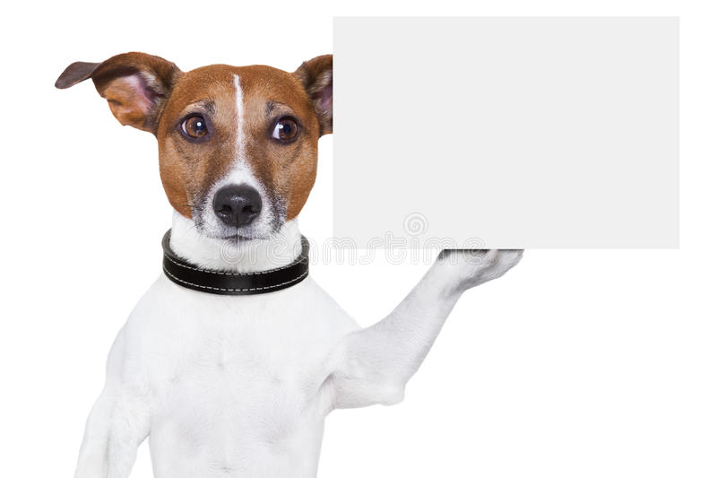 Copy space placard dog royalty free stock images