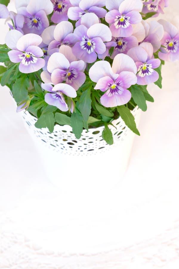 Copyspace blanco de los pensamientos púrpuras del rosa imagenes de archivo