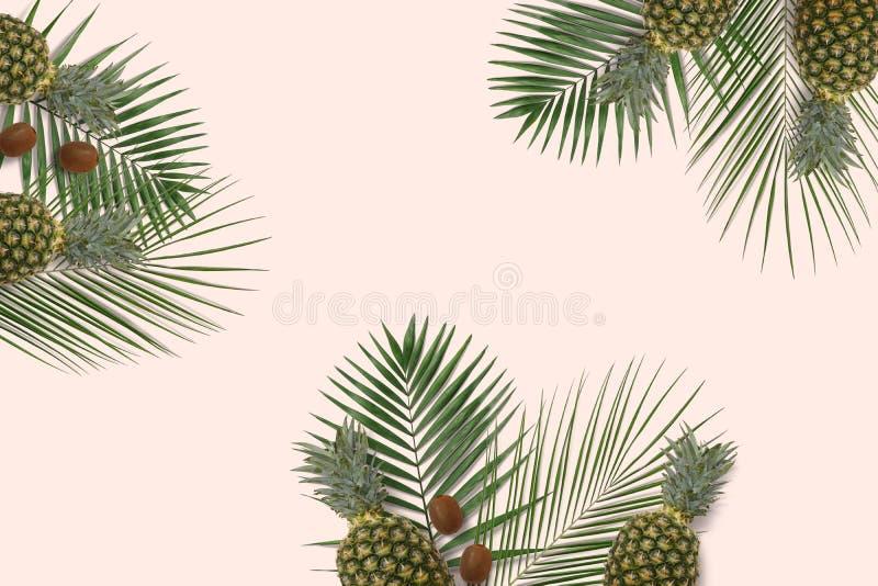 Copyspace mínimo de la bandera del verano Hojas de palma verdes en el fondo en colores pastel fotografía de archivo libre de regalías