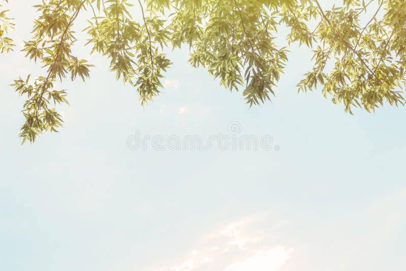 Copyspace niebo i ulistnienie motyle zielone niebo ilustracyjnego lata temat wektora drzewny ulistnienie przeciw niebu obrazy royalty free