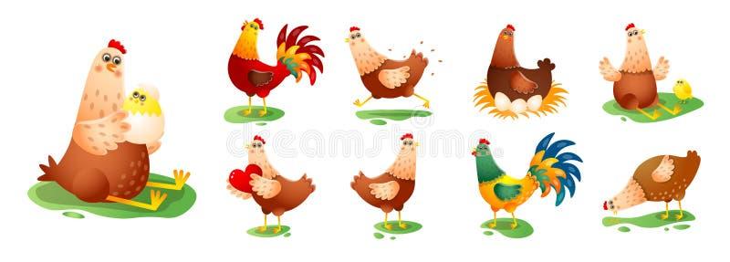 Coq de poule de poulet dans différentes poses réglées d'isolement sur le fond blanc illustration libre de droits