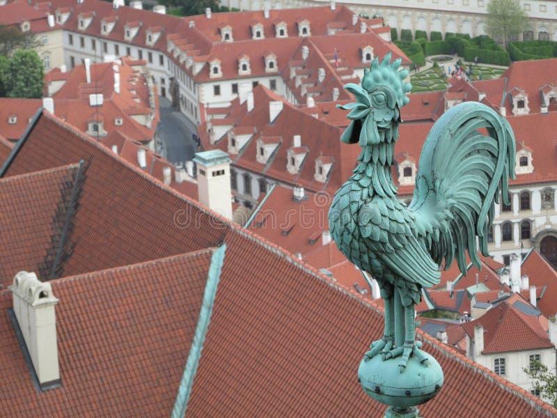 Coq de ville photos stock