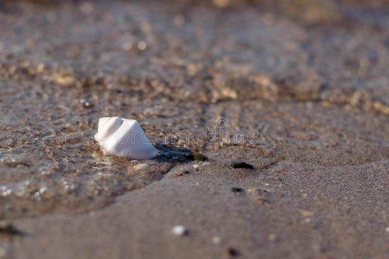 Coquillage photographie stock