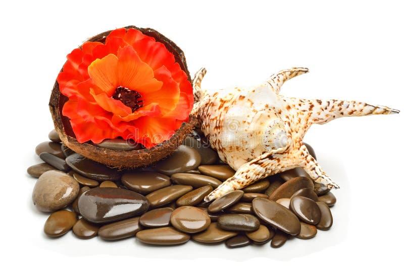 Coquillage, fleur dans la coquille de noix de coco sur des cailloux pour la station thermale photographie stock