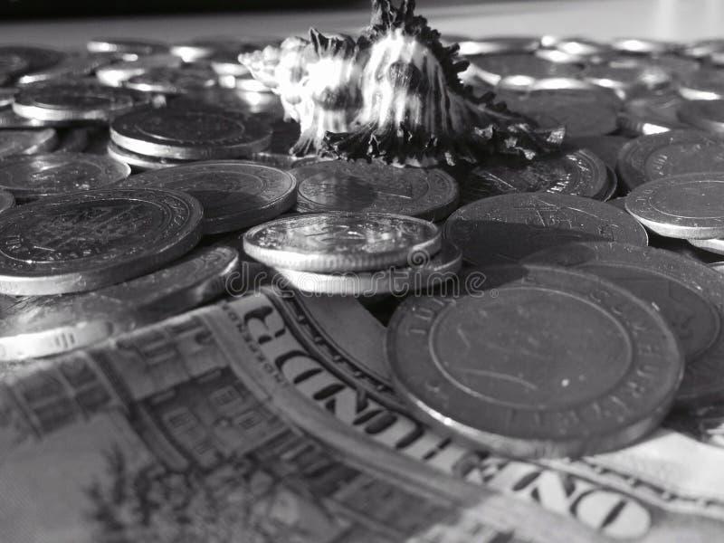 Coquillage noir et blanc sur des pièces de monnaie photographie stock libre de droits