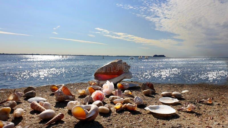Coquillage romantique de scène d'océan de paysage marin de ciel bleu d'été sur le voyage de vacances de vue de mer de relaxation  images stock