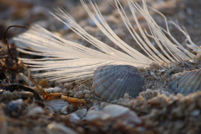 Coquillage sur la plage arénacée de la Mer Noire de l'Ukraine du sud image stock