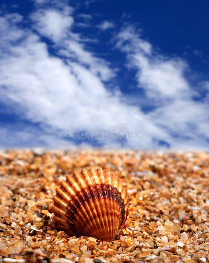 Coquillage sur la plage de sable image libre de droits