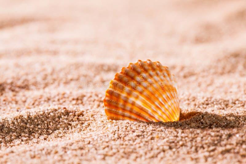 Coquillage sur la plage ensoleillée photos stock