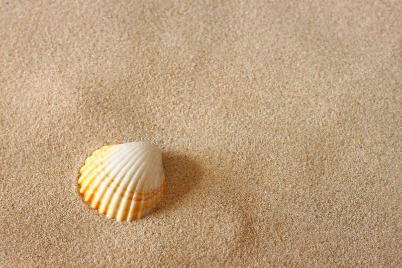 Coquillage sur le sable de plage photo stock