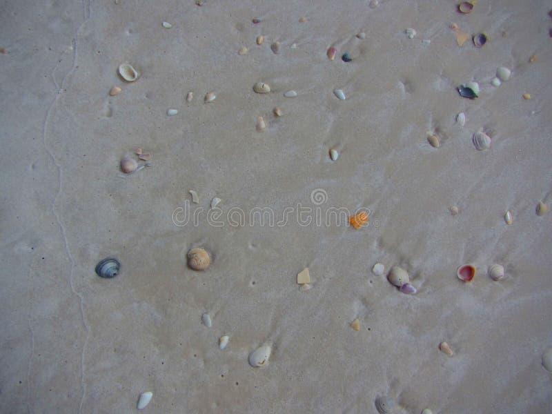 Coquillages colorés dans le sable photographie stock libre de droits