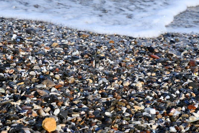 Coquillages colorés et petites pierres dans la vague de mousse photographie stock libre de droits