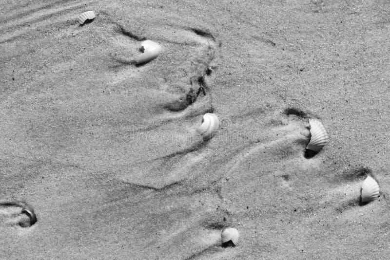 Coquillages de Brocken et plage humide de sable photographie stock libre de droits