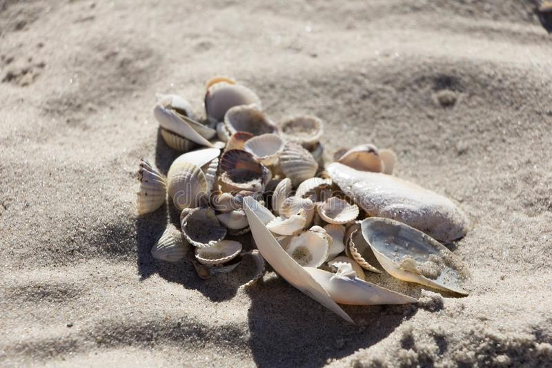 Coquillages de divers types et taille sur le sable propre images stock