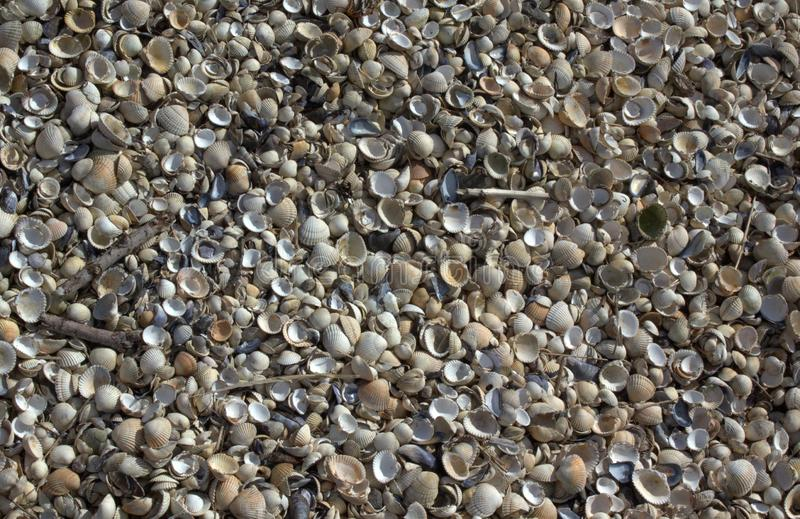 Coquillages de coquillages sur la plage image libre de droits