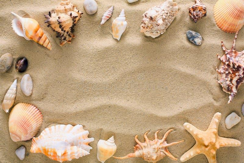 Coquillages et fond de cailloux, pierres naturelles de bord de la mer photos libres de droits