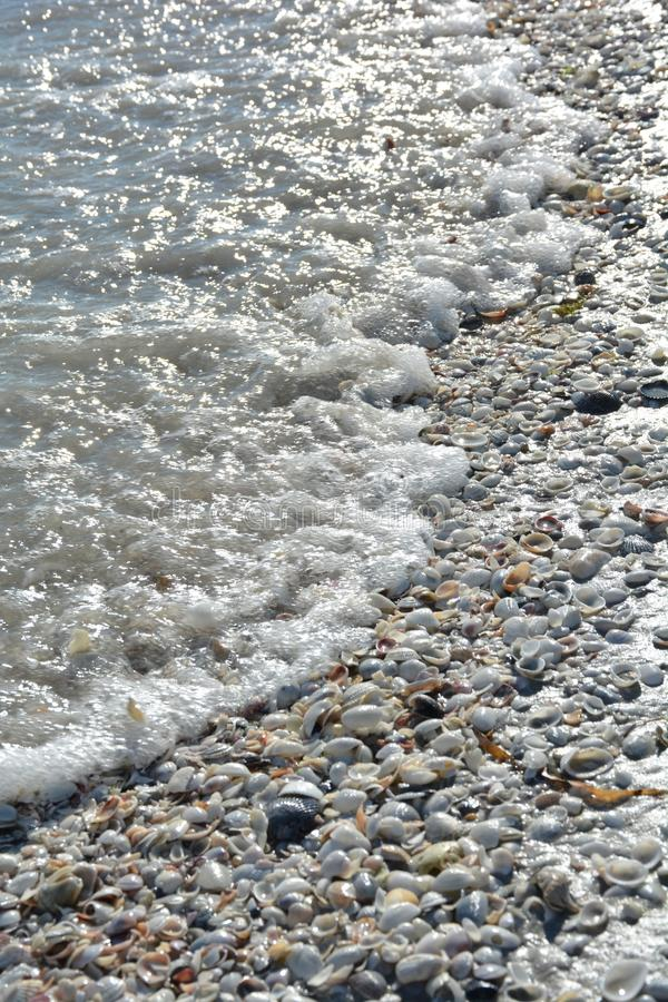 Coquillages et océan sur une plage de la Floride images stock