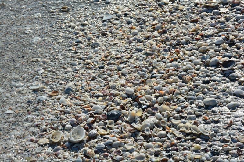 Coquillages et océan sur une plage de la Floride photos libres de droits