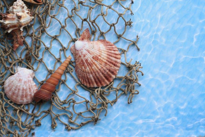 Coquillages marins sur un filet de pêche photographie stock
