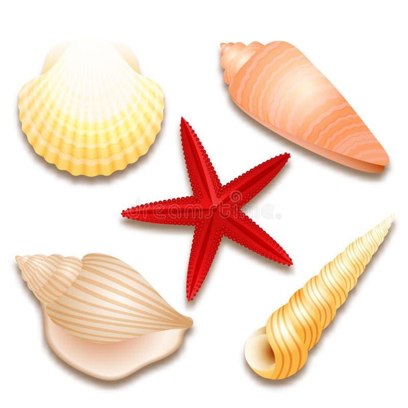 Coquillages réglés et étoiles de mer rouges illustration de vecteur