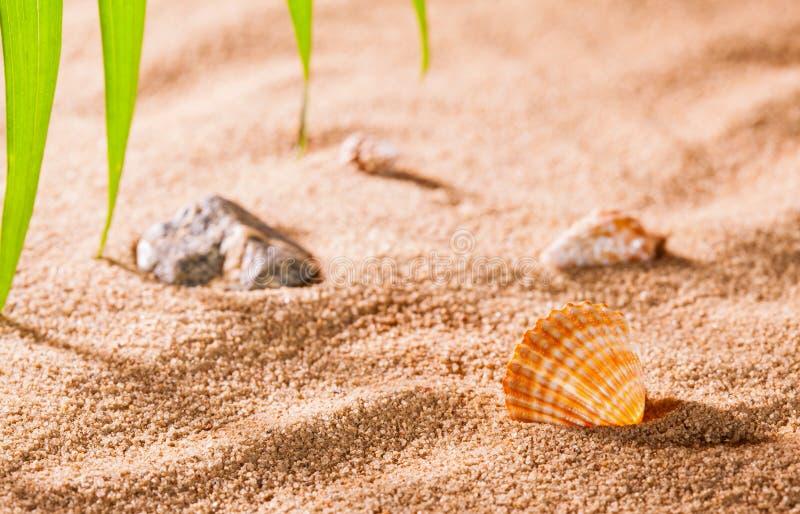 Coquillages sur la plage ensoleillée photographie stock