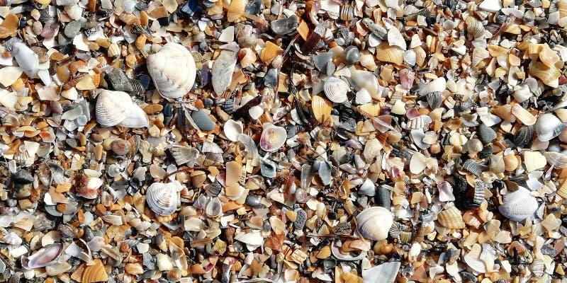 Coquillages sur la plage un jour ensoleill? Fond image libre de droits