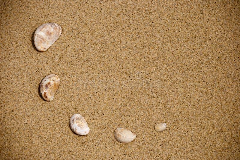 Coquillages sur le sable image stock