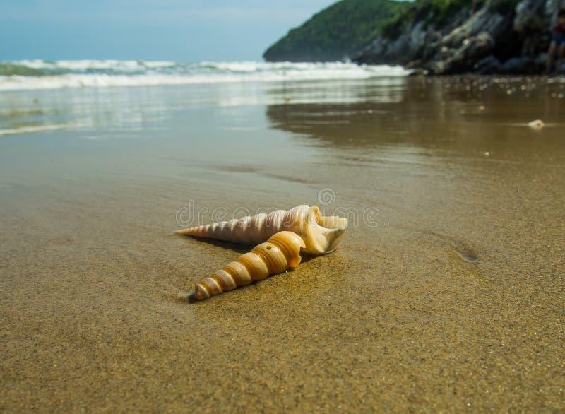 Coquillages sur le sable photographie stock libre de droits