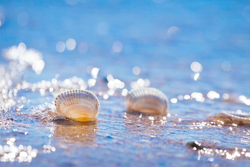 Coquillages transparents vides dans une vague chaude de plage de la Mer Noire en ciel clair bleu profond sur un contre-jour ensol images stock