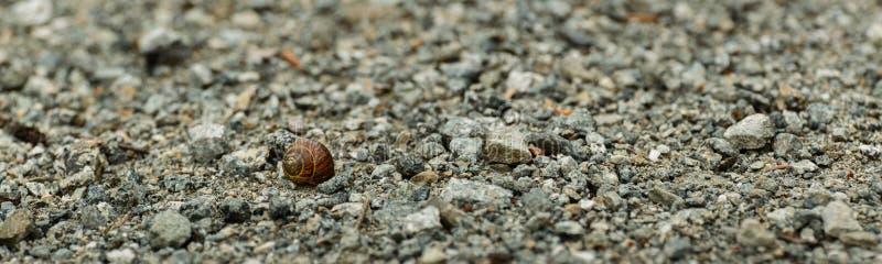 Coquille d'escargot de Brown sur une route pierreuse photo stock
