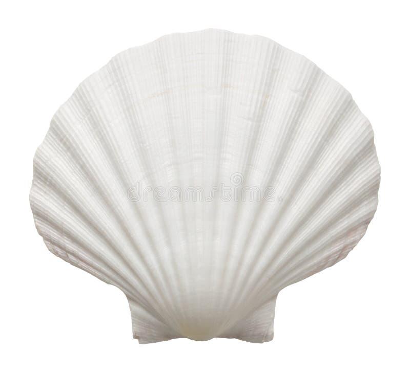 Coquille d'océan photos libres de droits