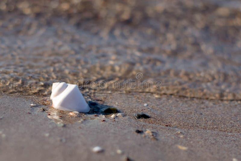 Coquille de conque en sable images stock