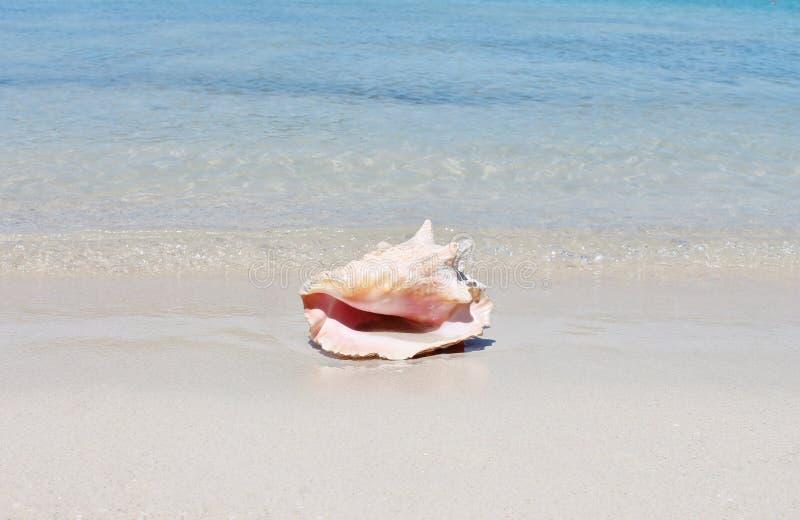 Coquille de conque sur la plage de sable avec la mer photographie stock
