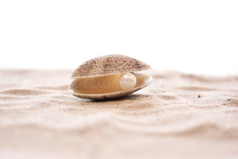 Coquille de mer avec la perle sur une plage sablonneuse photographie stock libre de droits