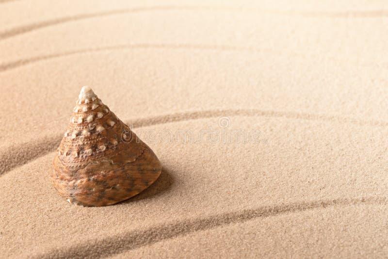 Coquille de mer de cône sur la plage sablonneuse photos stock