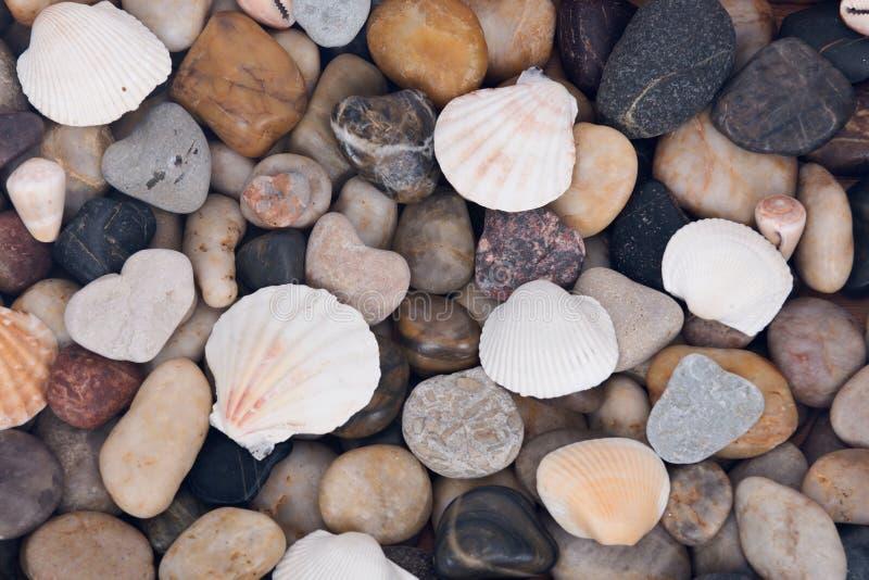 Coquille de mer et fond en pierre de caillou images libres de droits
