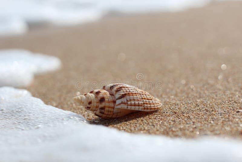 Coquille de mer sur la plage au-dessus du fond de paysage marin photos libres de droits