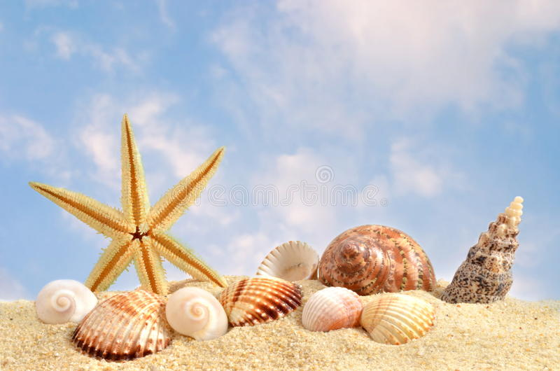 Coquille de mer sur la plage en sable photo stock